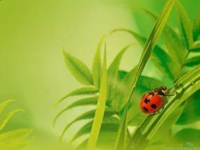 Художник Donald Zolan ( царица Томара), добавлено: 05.11.2014 16:54.  Девочка нагнувшись рассматривает гусеницу...